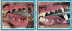 tuscaloosa-pet-dental-services
